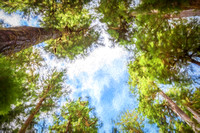 20130826 [C] PNW Vacation - ONP-Hoh Rainforest-Hall of Mosses Trail 007-Edit [TopImp(TSunsetI)]