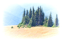 20130822 [C] PNW Vacation - ONP-Hurricane Ridge 062-Edit v3[TopImp(WaterII)]